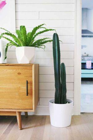 Plantas-para-Apartamento-22